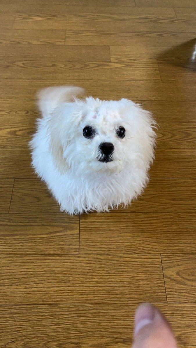 Polosan Muka Anjing : polosan, anjing, (@KHdaegal08), Twitter
