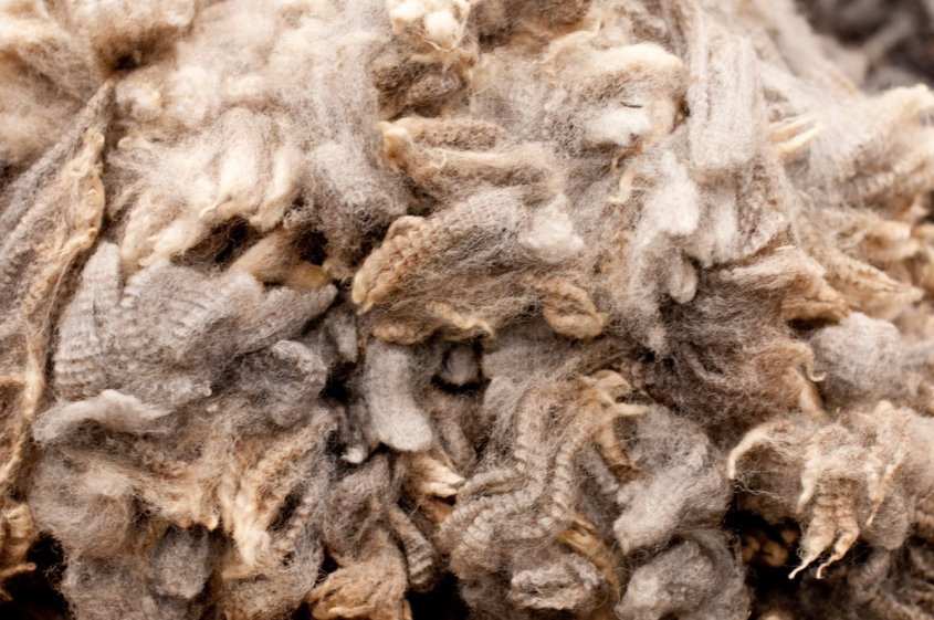CC BY 2.0 - Freshly shorn wool, via Wikimedia Commons. A pile of grey and beige wool in a pile, ranging in shades from light to dark. The individual strands are crimped, showing the natural curl of the sheep.
