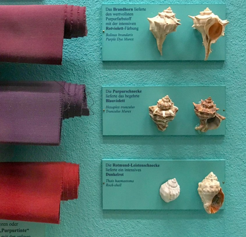 CC BY-SA 4.0 - Fabrics dyed purple from different species of sea snail, Wikipedia Commons. Three bolts of red and purple cloth and the kinds of snails they came from on the right. The snail shells look much like conch shells, but spikier.
