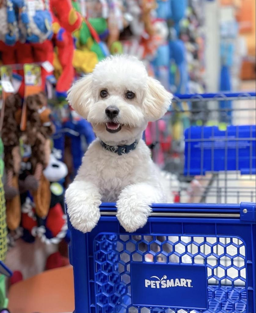 What Kind Of Dog Is In The Petsmart Commercial 2020 : petsmart, commercial, PetSmart, (@PetSmart), Twitter