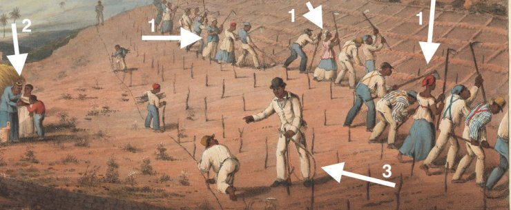 Der Bildausschnitt zeigt Sklaven die Zuckerrohr anbauen. Eine Reihe Sklaven arbeitet mit der Hacke und bereitet die Pflanzlöcher vor. Einige Arbeiter setzen Zuckerrohrsetzlinge. Am Rand stehen drei Sklaven, von denen einer Wasser gereicht bekommt.