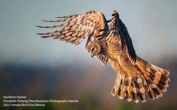 BirdLife_News photo
