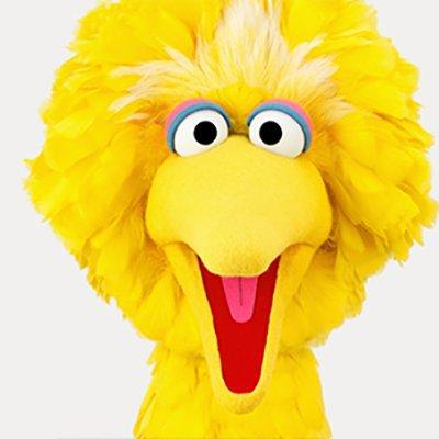 big bird bigbird twitter