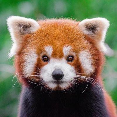 Nature Animals Animalsworid Twitter