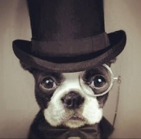 Animals In Bow Ties (@animalbowties) | Twitter