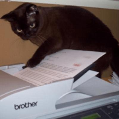 cat fax machine catfaxmachine