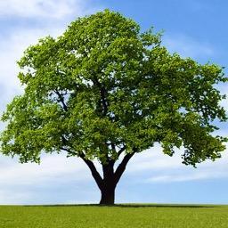 save sheffield trees saveshefftrees