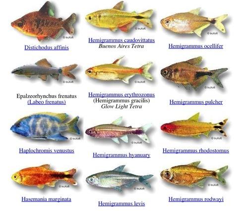 Aquarium Fish Names Aq...