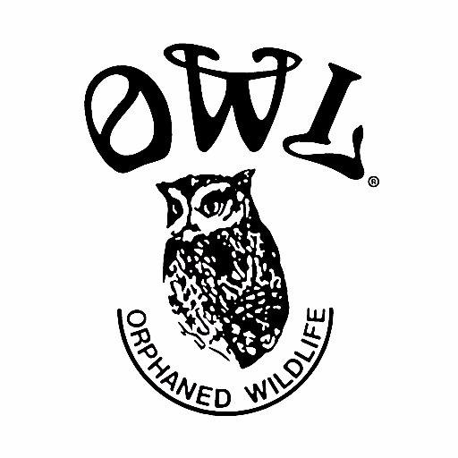 OWLRehab OrphanedWildlife on Twitter: