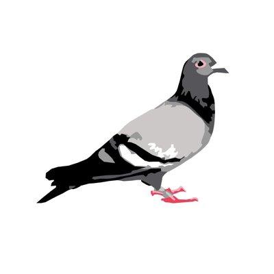 staple pigeon staplepigeon twitter