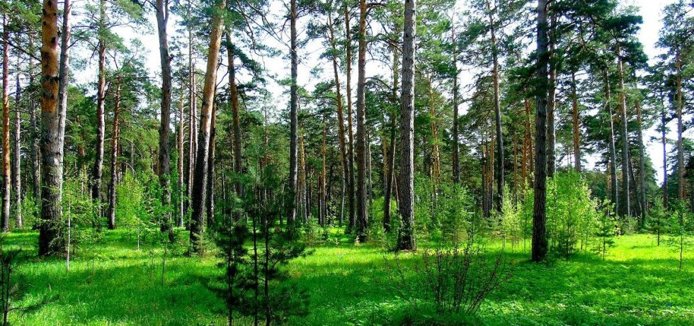 Forest - reducing energy consumption and carbon emissions - The Student Energy Project | PBSA News