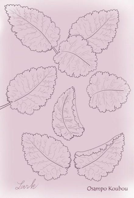 サクラソウ葉のパーツall