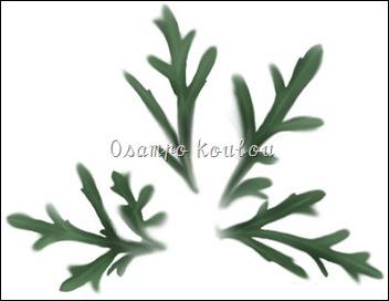 マーガレット葉サンプル