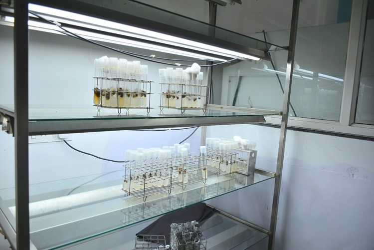 research-facility-plant-tissue-culture-lab