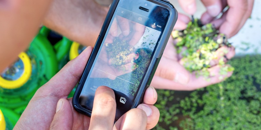 A volunteer uses their smartphone to capture a visual record of the insect they've found during a BioBlitz event held on Sidney Island. Gulf Islands National Park Reserve.