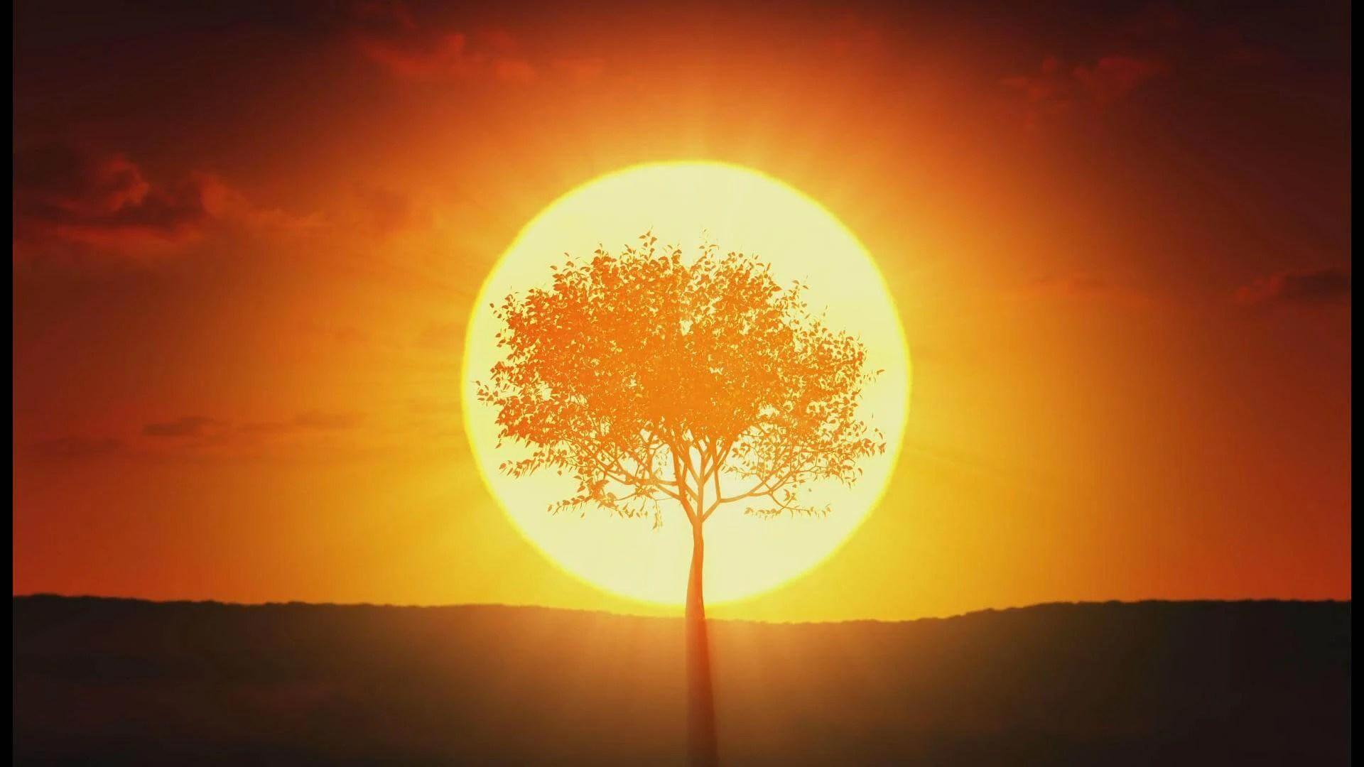 Peritus tree jpg