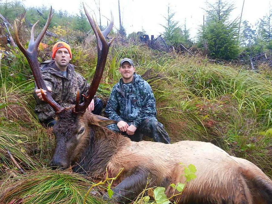 SW Washington hunters pursue a thinned elk herd  The