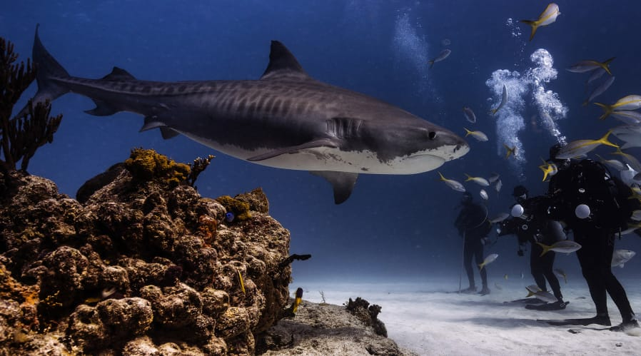 Vancouver Doctor Wins National Geographic Photography
