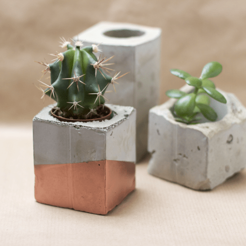 Concrete trend plants