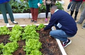 Primeira colheita foi realizada na Horta Comunitária do São Judas