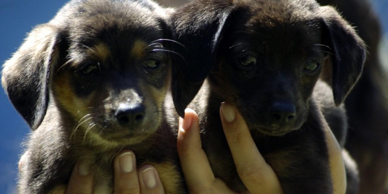 Canil Municipal atenderá no domingo para adoção de 300 animais