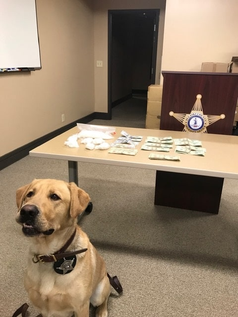 Traffic stop leads to K9 Zeus's largest seizure of meth, cash