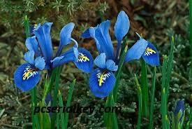 Blue Iris Crack 5.3.7.7