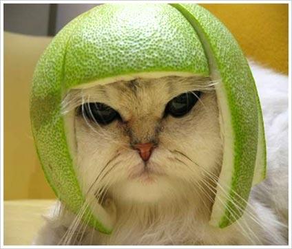 a nevetés funny cat kép