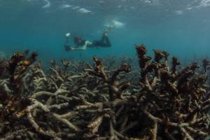 A wasteland of dead coral on Lizard Island, the Great Barrier Reef, this June. High temperatures have caused record bleaching and coral death this year.