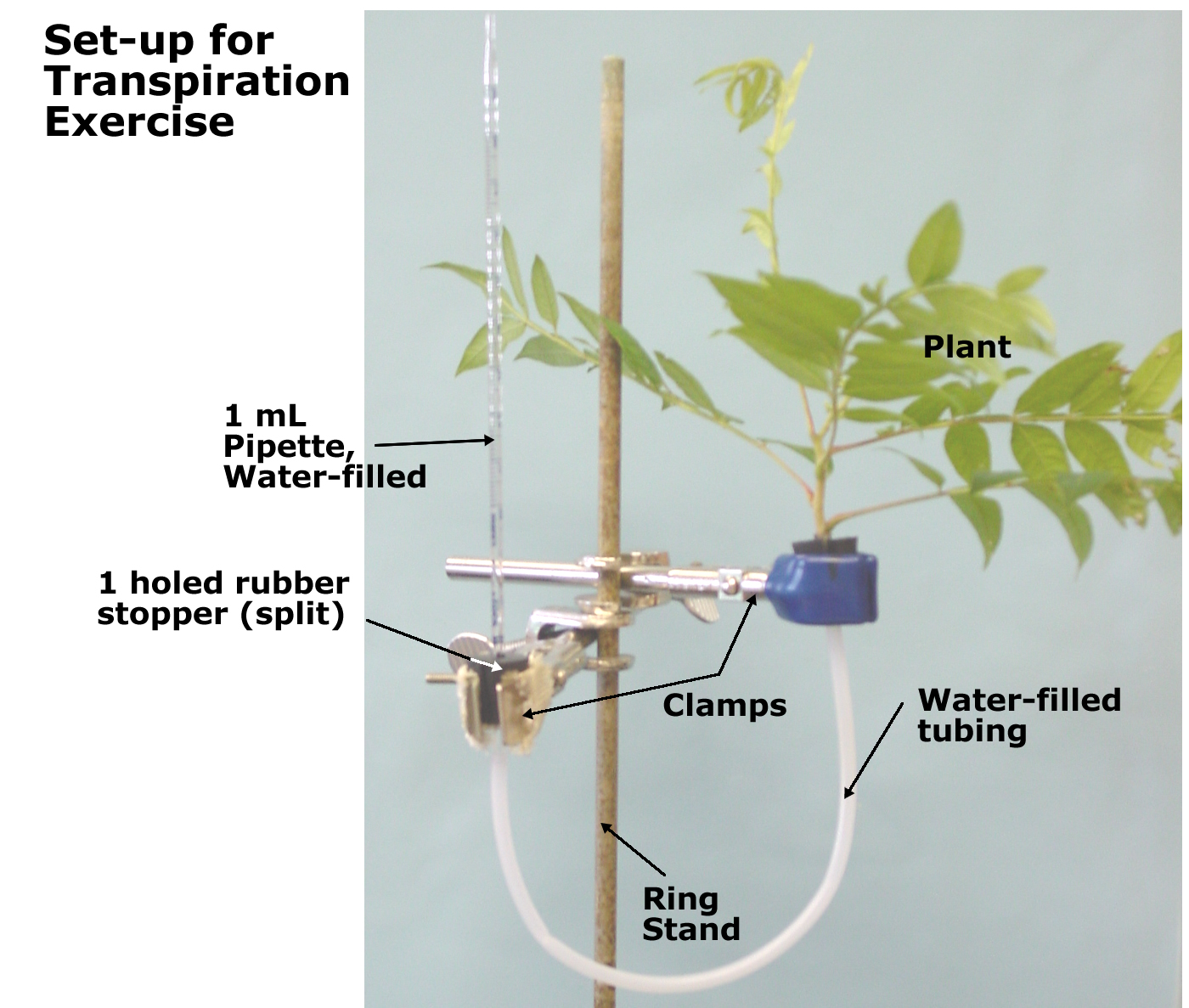 flower transpiration diagram 1992 toyota camry exhaust system the gallery for gt nitrogen fixation