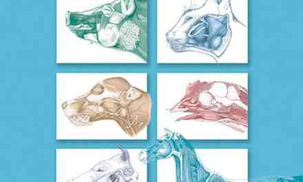 Textbook of Veterinary Anatomy 4th Edition PDF