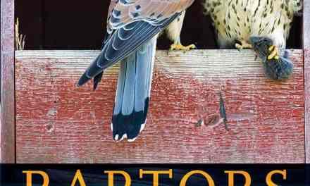 Raptors – The Curious Nature of Diurnal Birds of Prey PDF