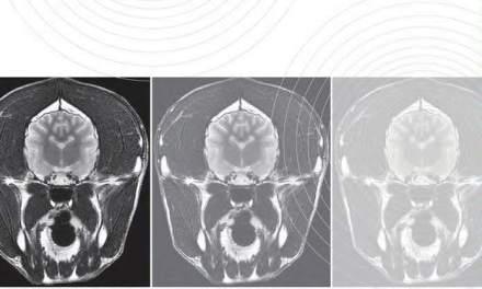 Practical Small Animal MRI