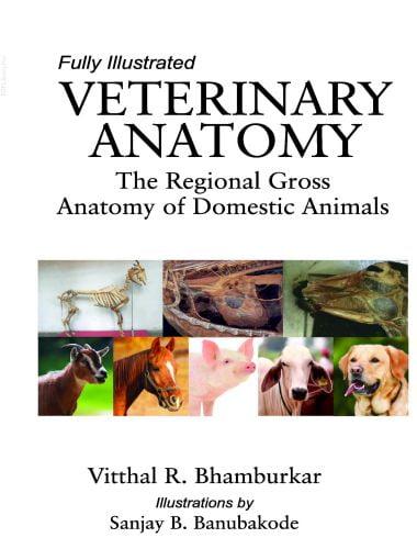 Veterinary Anatomy, The Regional Gross Anatomy of Domestic Animals