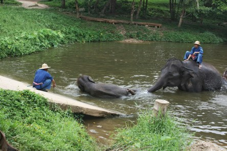 Kid elephant and mommy playing and bathing