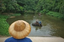 Elephant ride in the river