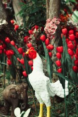 Red poppies and a -fake- rooster
