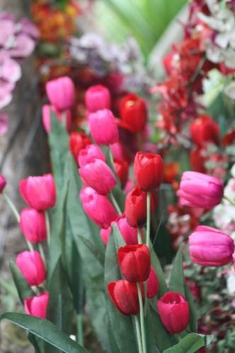 Lovely poppies in the gardens of Wat Doi Suthep