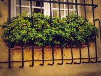 A beautiful plant 'caged'. Central Aix-en-Provence
