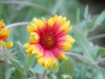 Flowers in Rousillion. #soft