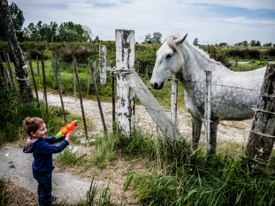 A young child playing with a white Camargue horse