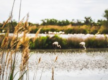Waterways of the Camargue, with flaming floks on the background #bokeh