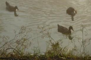 Duck pond, Kangaroo Valley, Australia