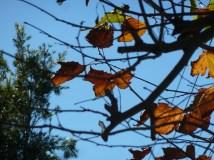 Autumn=fall