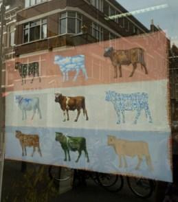 pop cows
