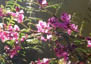 Sydney flora