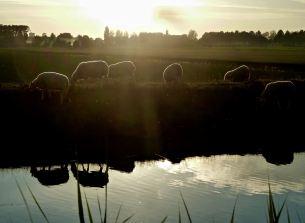 Luminous- The Netherlands