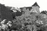 near Libourne
