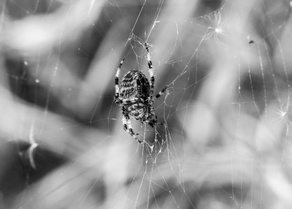 soft underbelly of the spider monochrome