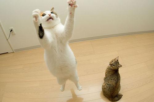 Cute Wallpaper Images For Desktop 画像 跳ねる!飛ぶ!落ちる!猫! Naver まとめ
